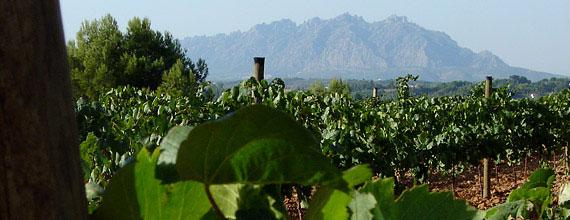 Duran Gran Reserva grows in the vineyard