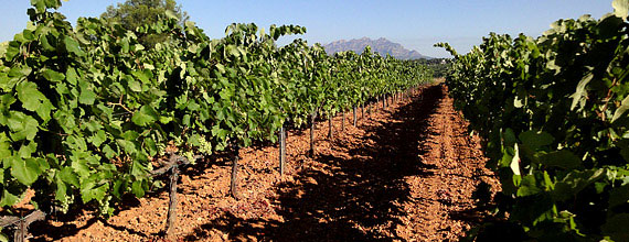 The Central Penedes